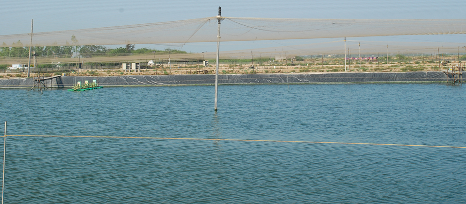 CAA - Coastal Aquaculture Authority  Ministry Of Agriculture