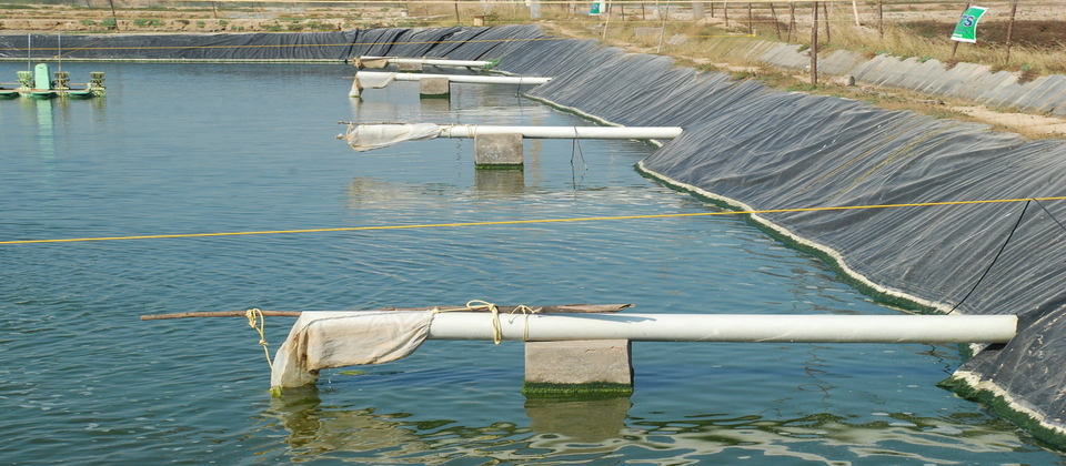 CAA - Coastal Aquaculture Authority| Ministry Of Agriculture And